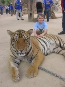 inti tiger