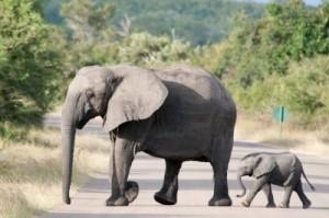 baby slon