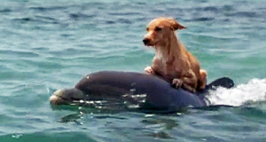 dolphins-help-save-dog-from-drowning
