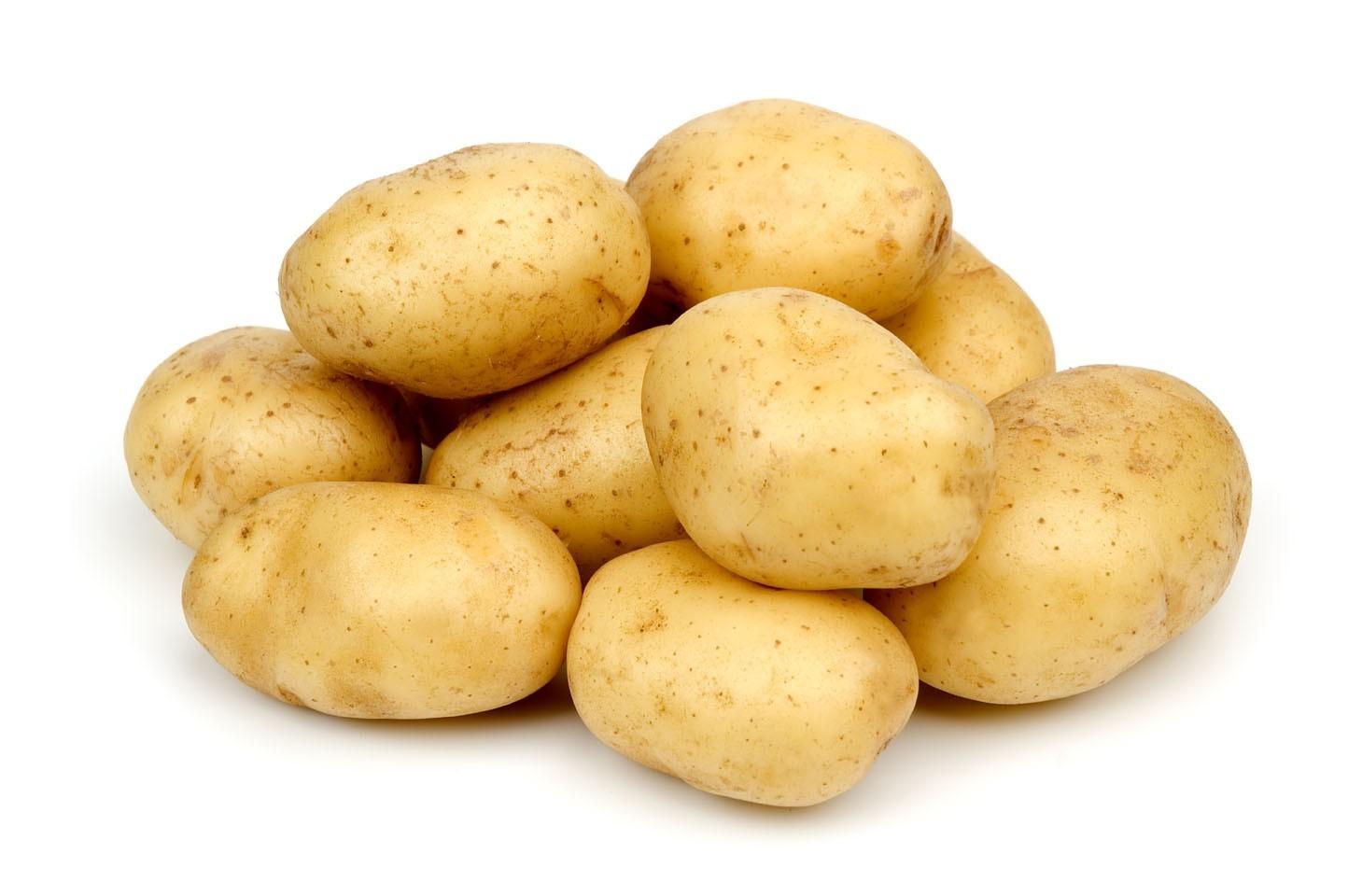 krompirjeve pocitnice