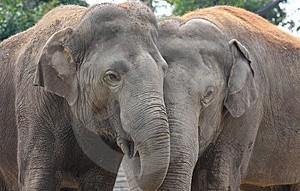 slonji objem