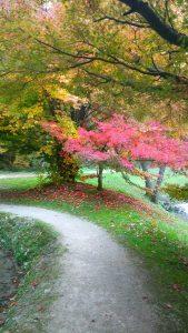narava_jeseni_smarjeske_toplice