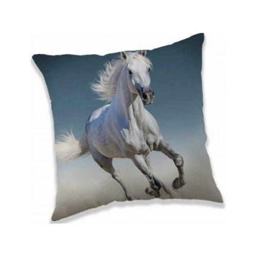 Blazina konj beli c